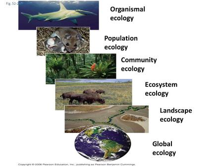 Fig. 52-2 Organismal ecology Population ecology Community ecology Ecosystem ecology Landscape ecology Global ecology.