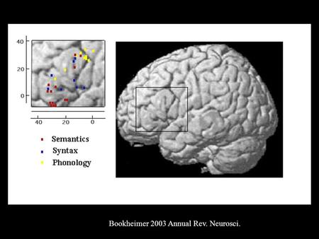 Bookheimer 2003 Annual Rev. Neurosci.. Phonology in IFG Gelfand and Bookheimer, Neuron 2002.