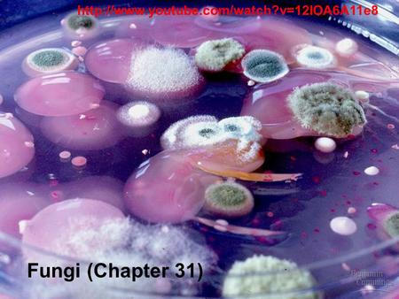 Http://www.youtube.com/watch?v=12IOA6A11e8 Fungi (Chapter 31)