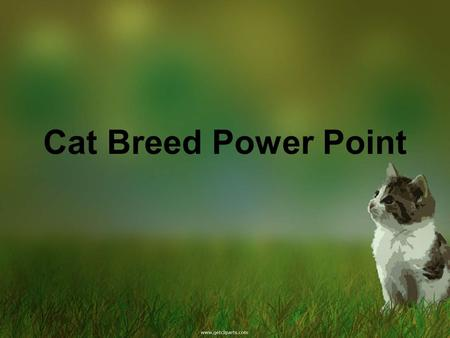 Cat Breed Power Point. Coat: very short, each hair tipped (agouty)Eyes: angled, Lean, slender body, large ears.