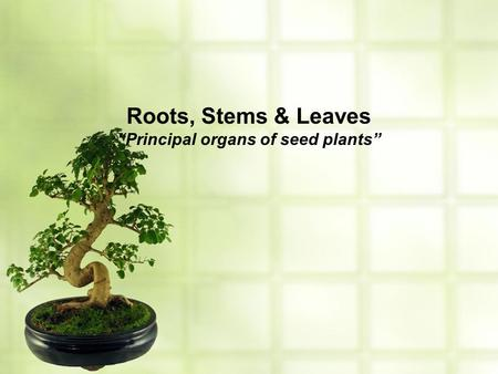 "Roots, Stems & Leaves ""Principal organs of seed plants"""