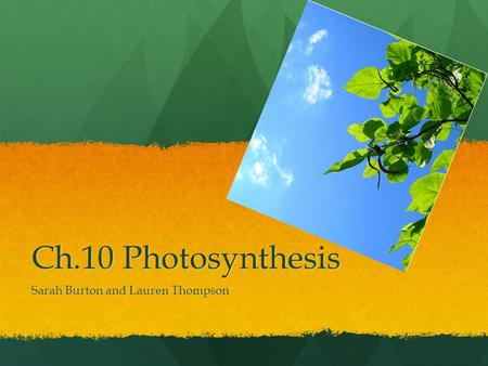 Ch.10 Photosynthesis Sarah Burton and Lauren Thompson.