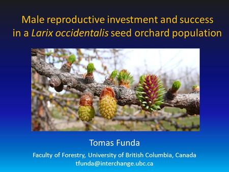 Male reproductive investment and success in a Larix occidentalis seed orchard population Tomas Funda Faculty of Forestry, University of British Columbia,