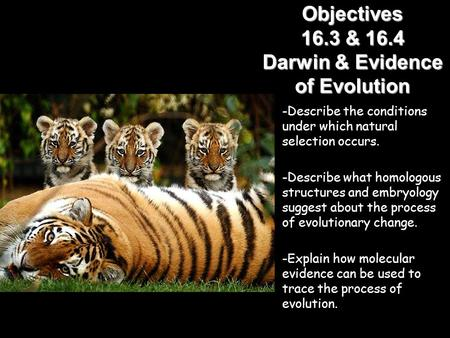 Lesson Overview Lesson Overview Evidence of Evolution Objectives 16.3 & 16.4 Darwin & Evidence of Evolution -Describe the conditions under which natural.