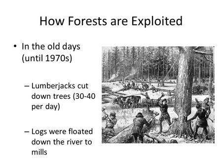 How Forests are Exploited In the old days (until 1970s) – Lumberjacks cut down trees (30-40 per day) – Logs were floated down the river to mills.