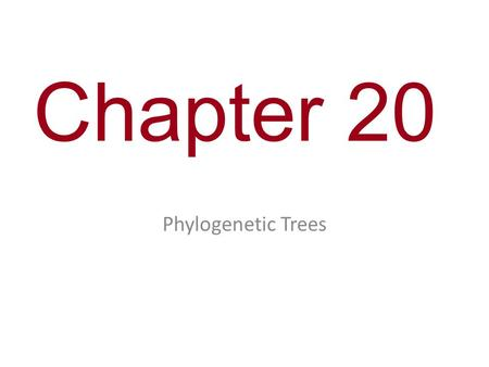 Chapter 20 Phylogenetic Trees. Figure 20.5 1234 5 Branch point: where lineages diverge This branch point represents the common ancestor of taxa A−G. This.