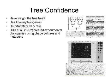 Tree Confidence Have we got the true tree? Use known phylogenies Unfortunately, very rare Hillis et al. (1992) created experimental phylogenies using phage.
