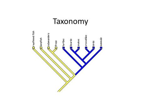 Taxonomy. Taxonomy: Defining groups of organisms based on similar characteristics. The result is a branching structure called the phylogenetic tree 4.