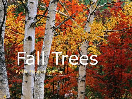 Fall Trees By Ms. Elizabeth Schnepp Autumn Colors  In Autumn we see trees with many different and beautiful colors.  What are some colors you might.