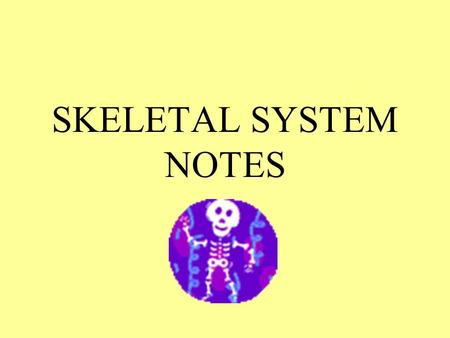 SKELETAL SYSTEM NOTES. 4 Major Functions Framework Protection Storage Blood cells.