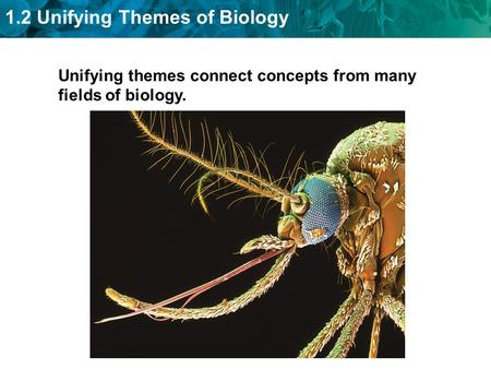 1.2 Unifying Themes of Biology Unifying themes connect concepts from many fields of biology.