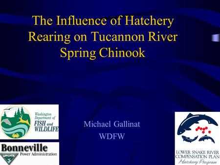 The Influence of Hatchery Rearing on Tucannon River Spring Chinook Michael Gallinat WDFW.