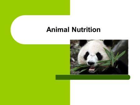 Animal Nutrition. What is animal nutrition? The dietary needs of domesticated and captive wild animals.