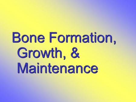 Bone Formation, Growth, & Maintenance. Types of Bone Cells  Osteocytes  Mature bone cells  Osteoblasts  Bone-forming cells  Osteoclasts  Bone-destroying.