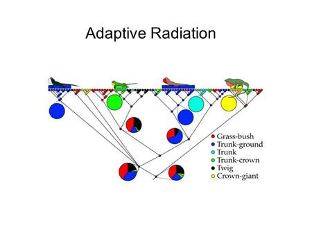 Adaptive Radiation. Adaptive radiation refers to those evolutionary groups that have exhibited an exceptional extent of adaptive diversification into.