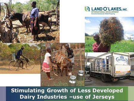 Stimulating Growth of Less Developed Dairy Industries –use of Jerseys.
