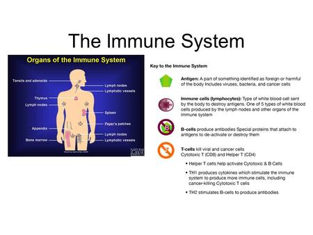 The Immune System. The Nature of Disease Infectious Diseases: Diseases, such as colds, that are caused by pathogens that have invaded the body. Pathogens.