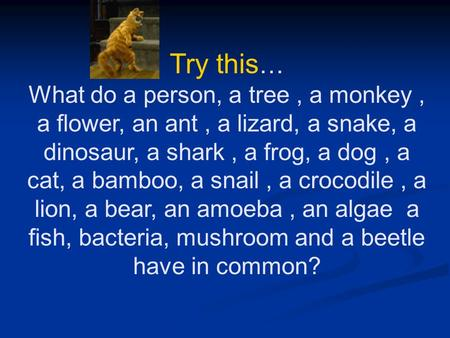 Try this … What do a person, a tree, a monkey, a flower, an ant, a lizard, a snake, a dinosaur, a shark, a frog, a dog, a cat, a bamboo, a snail, a crocodile,
