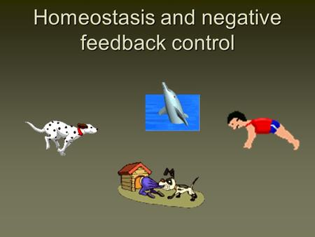 Homeostasis and negative feedback control. Advantages of Homeostasis Homeostasis has survival value because it means an animal can adapt to a changing.