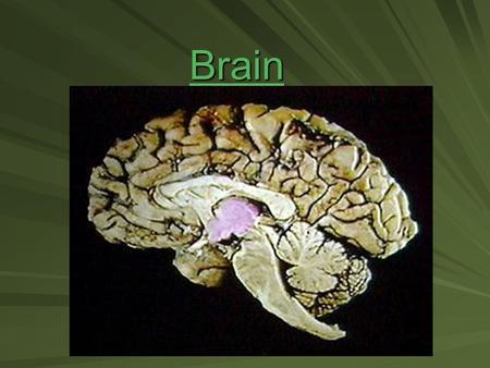 Brain. Major parts of brain 1. Brain stem – continuous with spinal cord; includes: 1.medulla oblongata- most inferior; a hard blow can be fatal; responsible.
