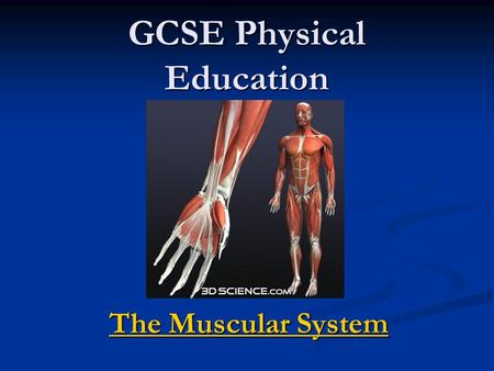 GCSE Physical Education The Muscular System The Muscular System.