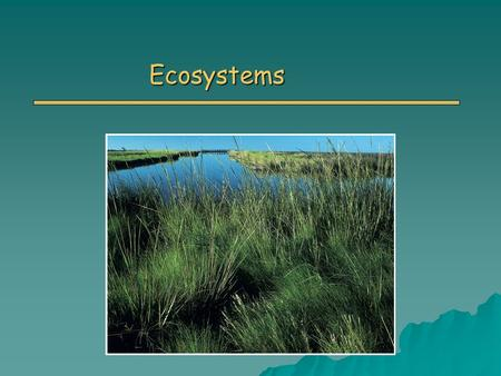 Ecosystems. Primary Vocabulary Terms o Ecosystem o Biomass o Law of Conservation of Energy o Law of Conservation of Matter o Trophic levels o Detritus.