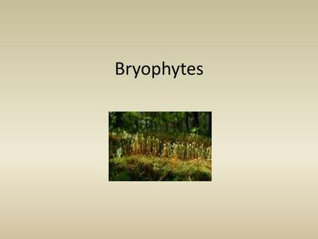 Bryophytes. Bryophytes are nonvascular plant; examples are mosses and their relatives.