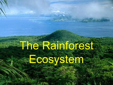 The Rainforest Ecosystem. What is a Rainforest? a tropical woodland with an annual rainfall of at least 100 inches (254 centimeters) and marked by lofty.