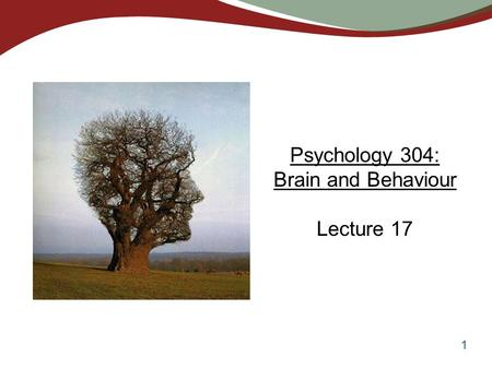 1 Psychology 304: Brain and Behaviour Lecture 17.