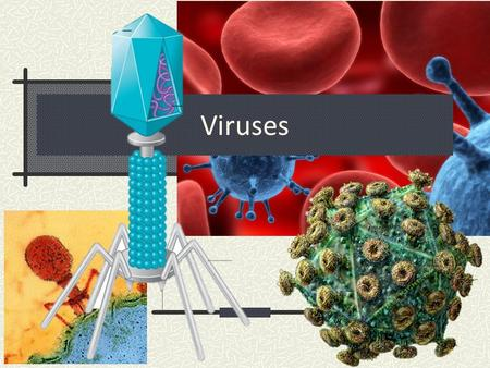 Viruses. What to Know: Learning Objectives Overview: What are some basic facts about viruses? Structure: What are the shapes? Reproduction: What is the.