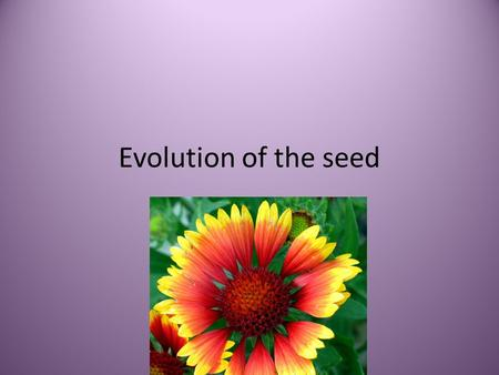 Evolution of the seed.