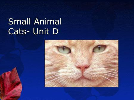 Small Animal Cats- Unit D. Essential Standard 8.00 Use information specific to each breed to choose the best cat for a given use.