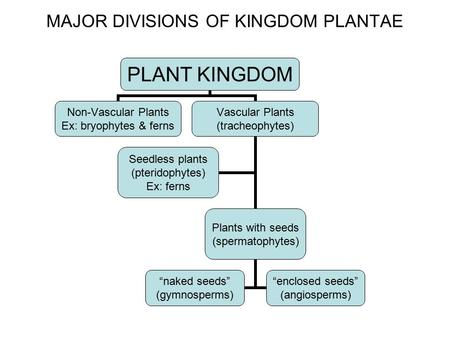"PLANT KINGDOM Non-Vascular Plants Ex: bryophytes & ferns Vascular Plants (tracheophytes) Plants with seeds (spermatophytes) ""naked seeds"" (gymnosperms)"