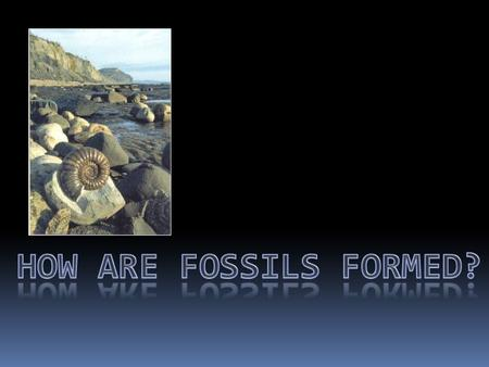 What is a fossil? A fossil is the remains or evidence of any plant or creature that once lived on the earth.