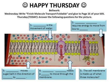 "HAPPY THURSDAY Bellwork: Wednesday: Write ""Finish Molecule Transport Foldable"" and glue to Page 16 of your IAN. Thursday (TODAY): Answer the following."