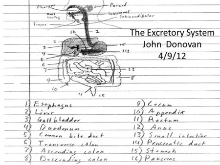 The Excretory System John Donovan 4/9/12. Excretory System The function of the excretory system is to transport the waste from the food that we got energy.