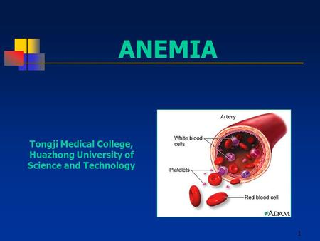 1 ANEMIA Tongji Medical College, Huazhong University of Science and Technology.