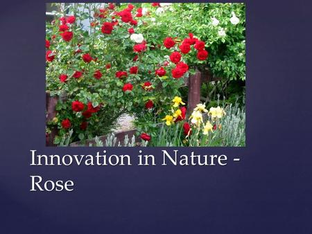 Innovation in Nature - Rose. { Project on Aadhaar Card Implementation NCAT'13.