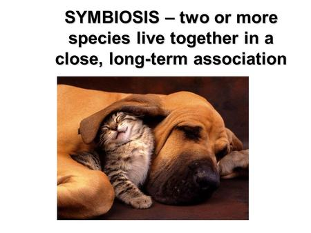 SYMBIOSIS – two or more species live together in a close, long-term association.