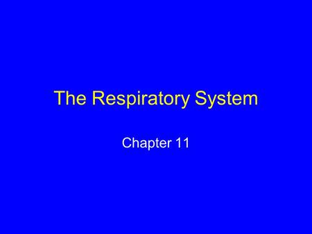 The Respiratory System Chapter 11. Respiration Physiological process by which oxygen moves into internal environment and carbon dioxide moves out Oxygen.