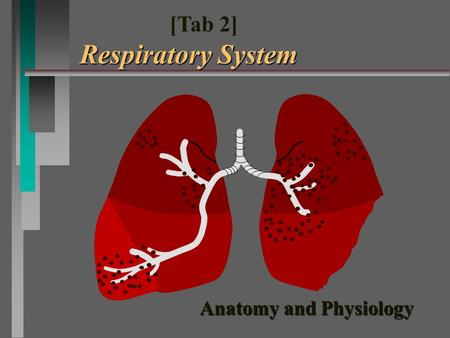 Anatomy and Physiology Respiratory System [Tab 2] Respiratory System.