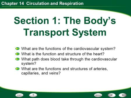 Chapter 14 Circulation and Respiration Section 1: The Body's Transport System What are the functions of the cardiovascular system? What is the function.