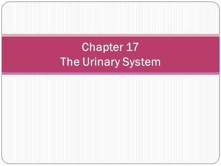 Chapter 17 The Urinary System