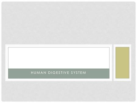 HUMAN DIGESTIVE SYSTEM DIGESTION Phases Include 1.Ingestion 2.Movement 3.Mechanical and Chemical Digestion 4.Absorption 5.Elimination.