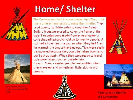 Home/ Shelter The Comanches lived in cone shaped tipis.They used many different materials to make their shelter. They used twenty  to thirty poles to cover.