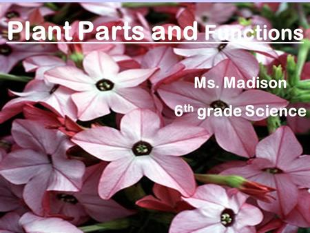 Plant Parts and Functions