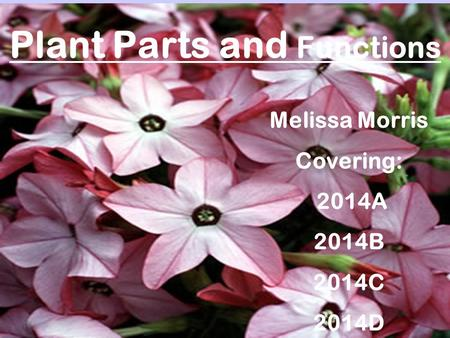 Plant Parts and Functions Melissa Morris Covering: 2014A 2014B 2014C 2014D.
