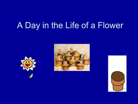 A Day in the Life of a Flower. Flower Function Primary Function: -To attract animals to pollinate the plant and reproduce. This is necessary in order.