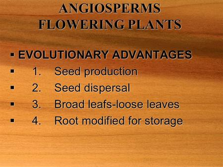 ANGIOSPERMS FLOWERING PLANTS  EVOLUTIONARY ADVANTAGES  1.Seed production  2.Seed dispersal  3.Broad leafs-loose leaves  4.Root modified for storage.