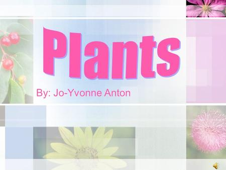 By: Jo-Yvonne Anton Overview This is a science lesson that will help students understand the five parts of a plant and their functions. Students will.